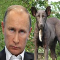 Senzational! Cainele care e leit Putin!