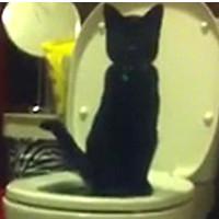 Video: Un barbat isi invata pisica sa foloseasca toaleta