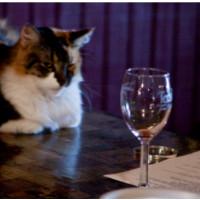 Inventie incredibila! Vinul pentru pisici!