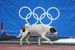 Primaria din Soci dispune uciderea cainilor vagabonzi cu ocazia Olimpiadei