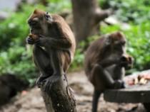 Cercetatorii chinezi au creat maimute autiste