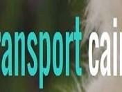 Transportul cainilor in Europa, posibil prin servicii dedicate