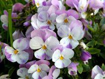 Florile si arborii lunii mai. Minunatiile lunii lui florar