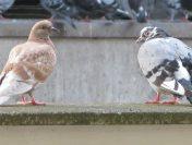 Parizienii ies in strada pentru a apara drepturile porumbeilor