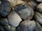 Incredibil! Gazele scoicilor din Marea Baltică au un impact major asupra încălzirii globale