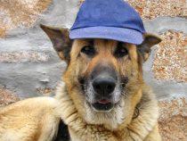 Un câine din SUA devine șomer cu acte în regulă și cu beneficiile de rigoare
