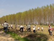 4 hectare noi de perdele forestiere plantate de ViitorPlus