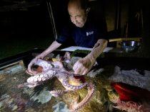 """Un bărbat de 84 de ani și-a câștigat renumele de """"îmblânzitorul de caracatițe"""""""